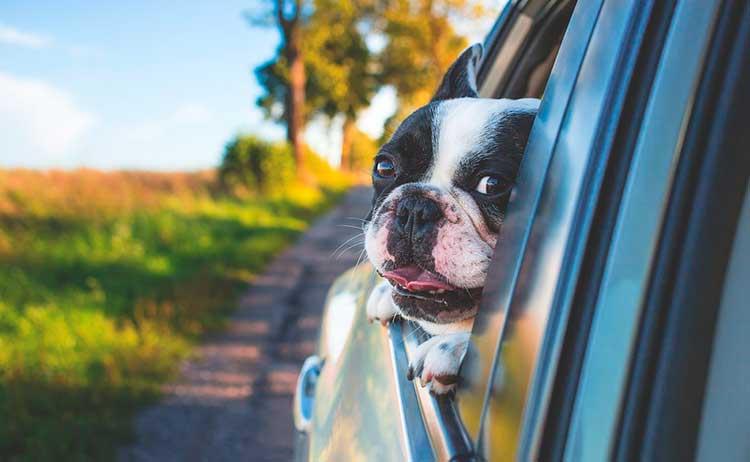 Meios-de-transporte Viajar com o animal de estimação