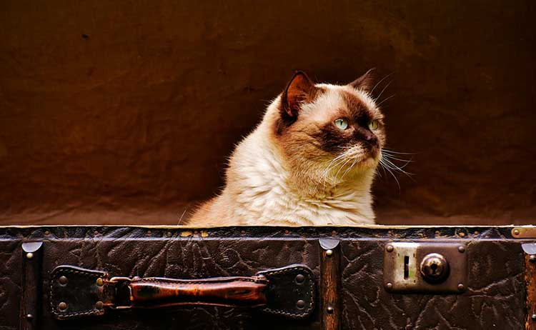 Prepare-seu-bichinho Viajar com o animal de estimação