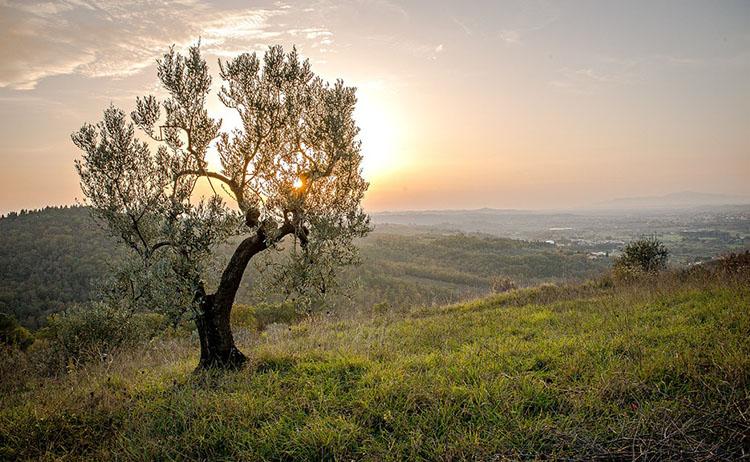 Agroturismo Estrada Real: Por onde começar?