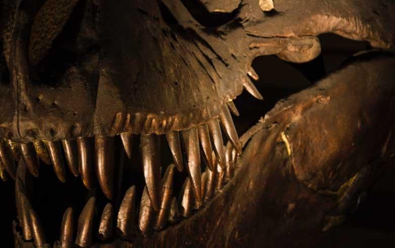 Museu-de-Historia-Natural-de-Londres-2 7 pontos turísticos imperdíveis em Londres