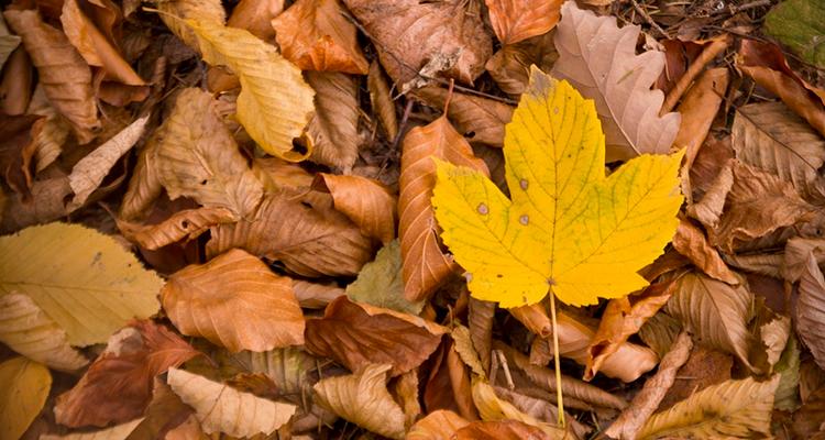 características do Outono