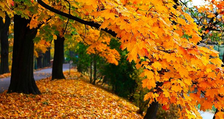 curiosidades-sobre-a-estação Outono: curiosidades e características