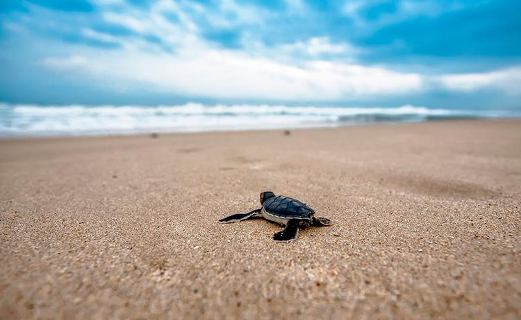 praias-de-desova Como viajar de graça e realizar trabalho voluntário