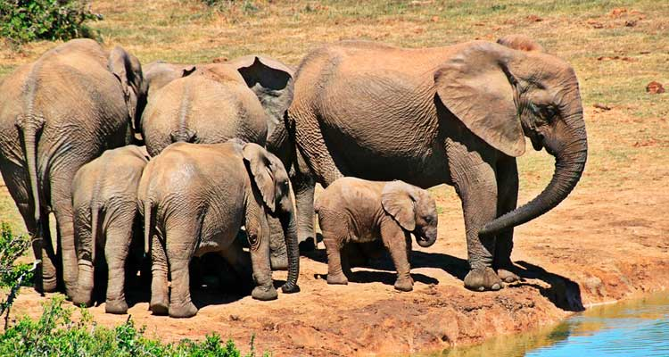 Kruger_National_Park Como fazer um safári na África do Sul?