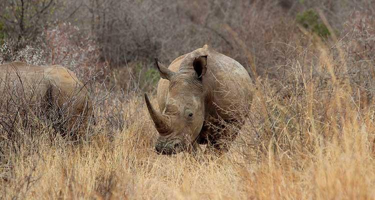 Parque Nacional Pilanesberg
