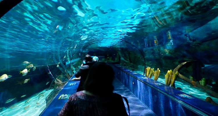 Visite o Ripley's Aquarium