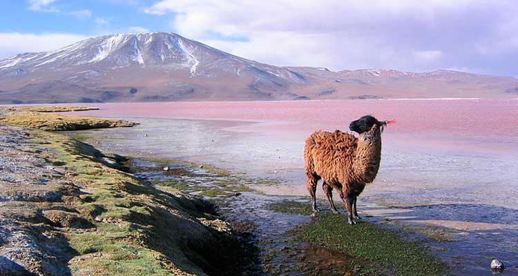 mercosul5 9 destinos para viajar sem passaporte