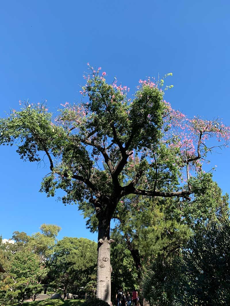 Arvore-Jardim-Japones-em-Buenos-Aires Roteiro de 4 dias em Buenos Aires