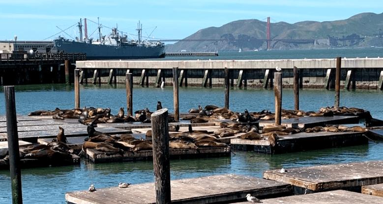 leoes-marinhos-e-focas-pier-39 O que Fazer em San Francisco