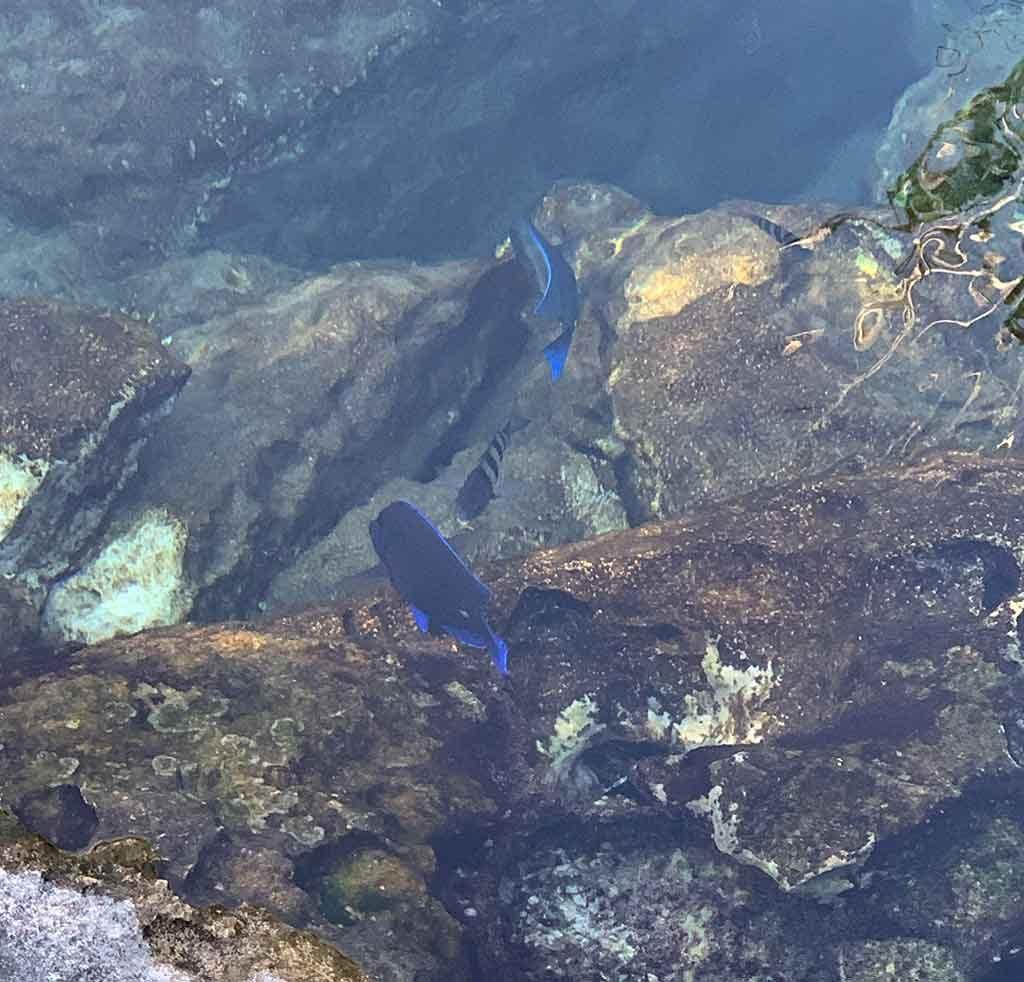 peixe-no-xel-ha-1024x982 Passeios em Cancún realmente valem a pena?