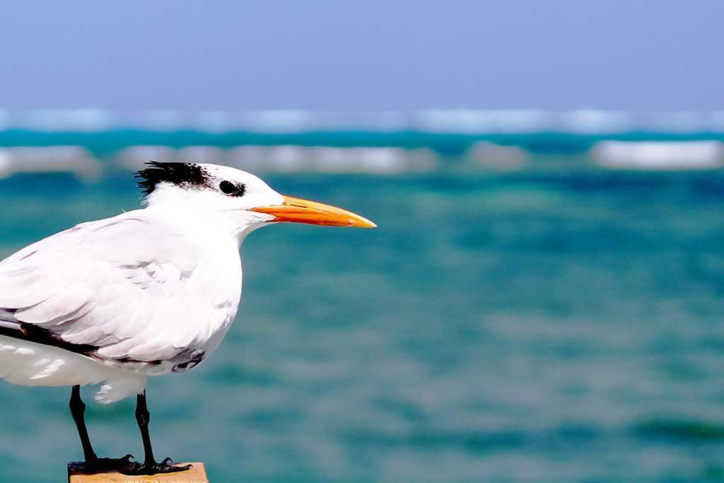 Cabo-de-san-lucas-mexico-1024x683 Melhores praias do México: conheças as praias mais bonitas e paradisíacas para se divertir