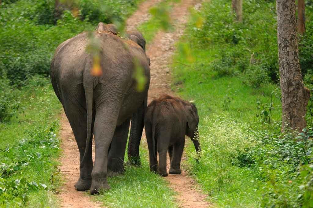 viagem-pe-no-chao-1024x680 13 curiosidades sobre a Índia que você não sabe