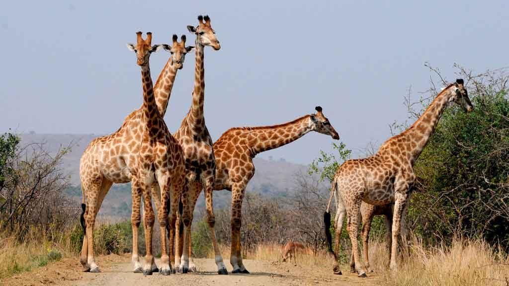 O-que-fazer-na-Africa-do-Sul-1024x576 O que fazer na África do Sul: cidades, passeios e utilidades